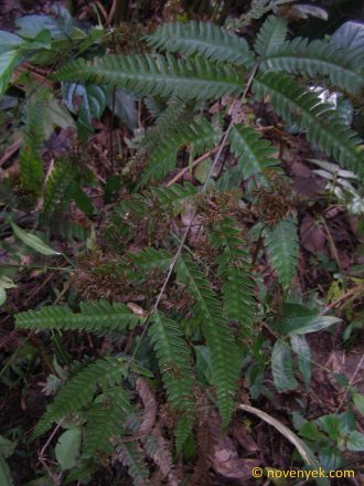 Image of undetermined plant Thailand (5)